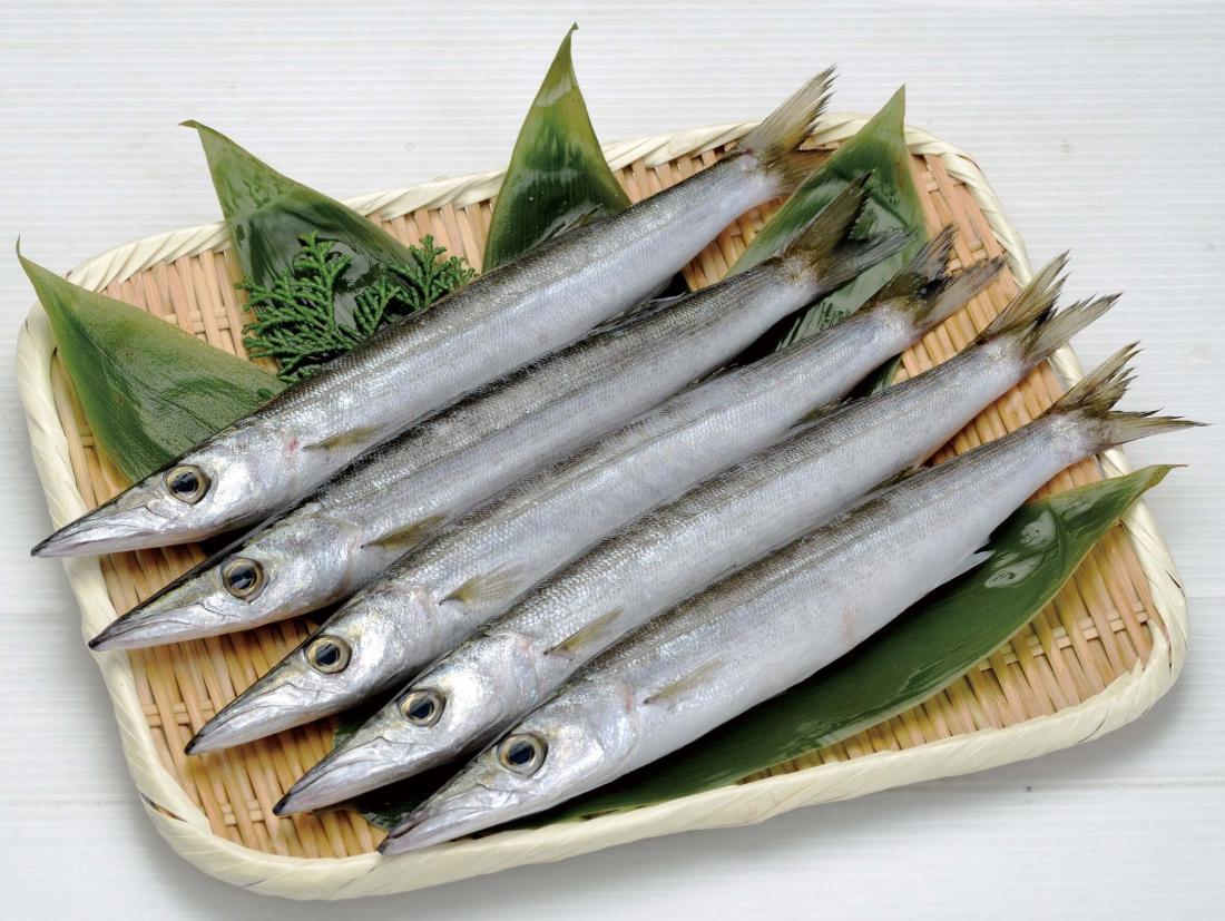 小田原四季の代表魚「秋」ヤマトカマス