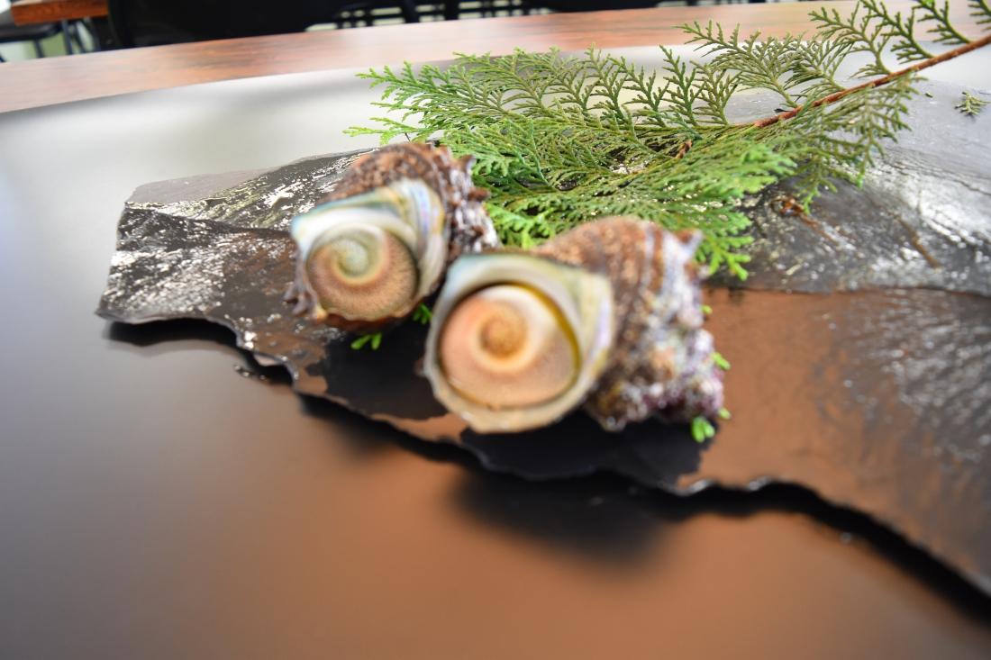 小田原四季の代表魚(夏)サザエ