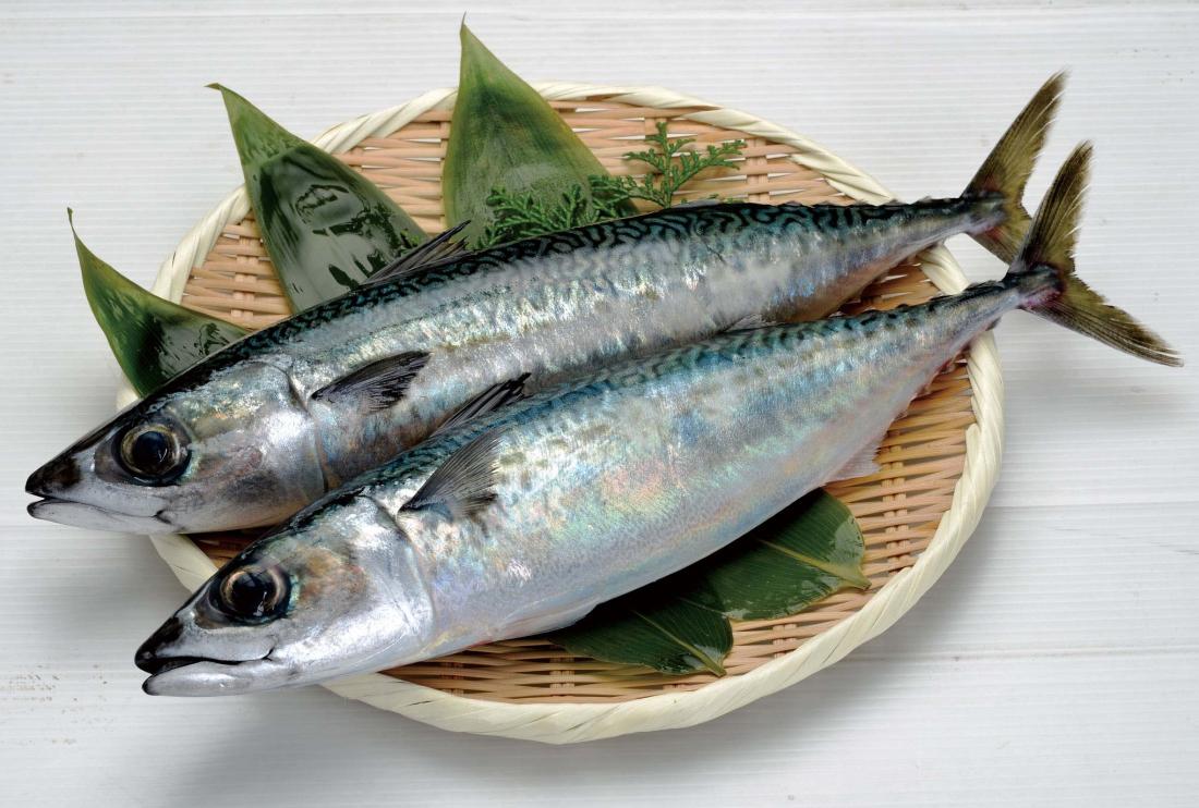 小田原四季の代表魚(秋)サバ