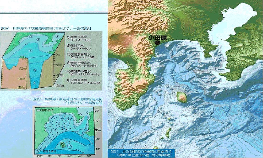 相模湾・小田原の海