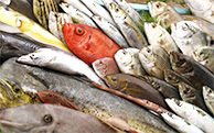 写真は10月頃、主に黒潮系の回遊魚です
